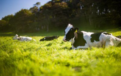 What Are the Long Term Effects of the Dairy Crisis?