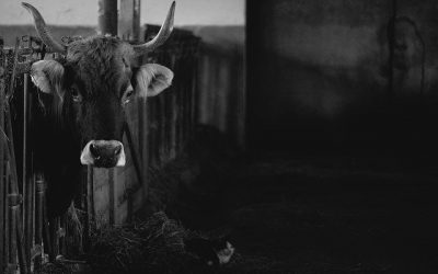 Practical Solutions for Fixing the Dairy Crisis