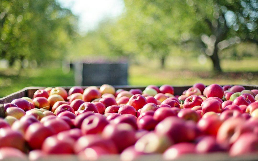 US Apple Farmers Struggle with Nationwide Water Shortage