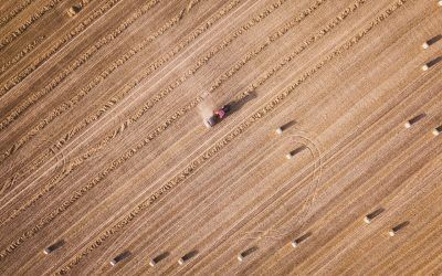Can Dry Farming Help U.S. Farmers Cope with Drought?