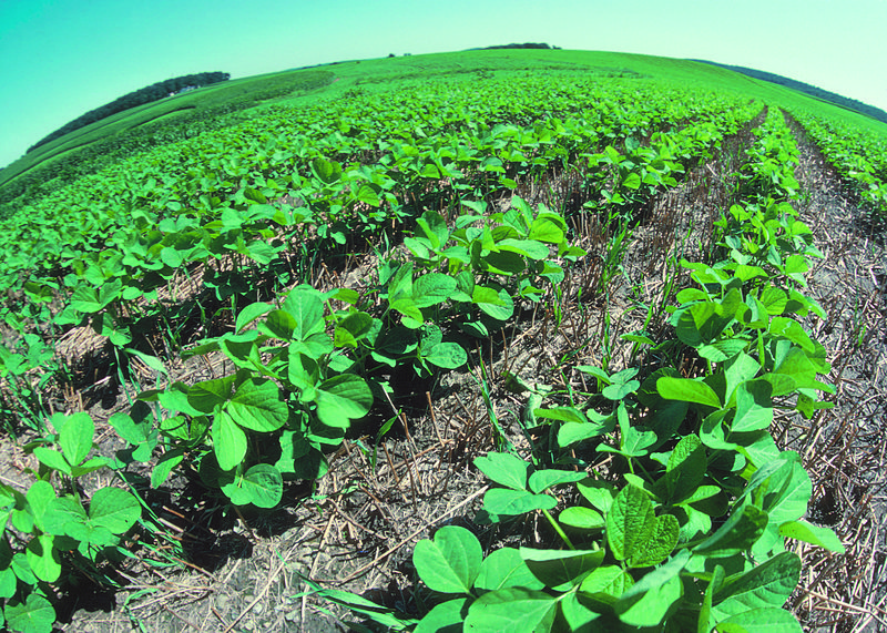 Can No Till Farming Help Conserve Water on U.S. Farms?
