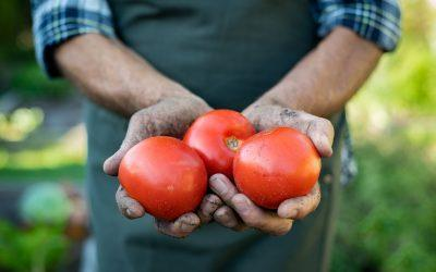 How Will Tariffs Impact US Farmers in 2020?