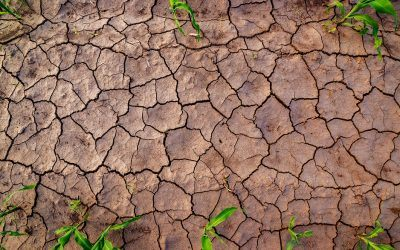 Water Crisis Management & How It Needs to Change