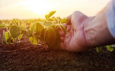 Considerations for Going Organic