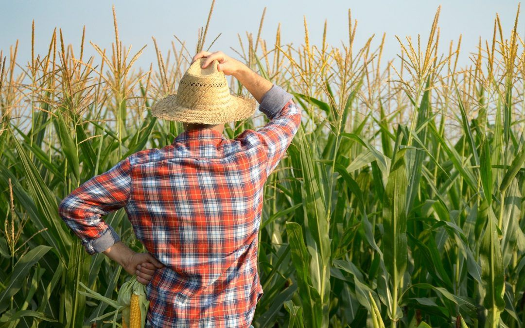 Solutions for Increasing Agricultural Productivity