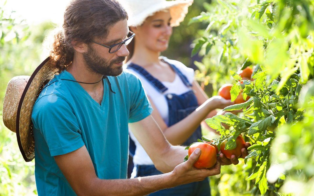 How Food Production Will Need to Change to Become More Sustainable
