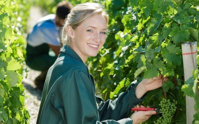 Steps for Starting a Wine Business in 2020