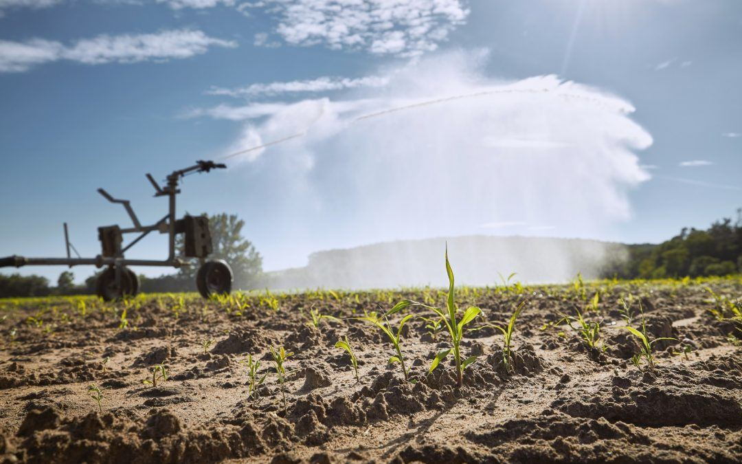 How Water Scarcity Impacts Farm Productivity