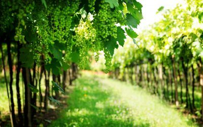 Tips for Winery and Vineyard Financing
