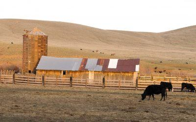 How to Apply for a Cattle Ranch Loan