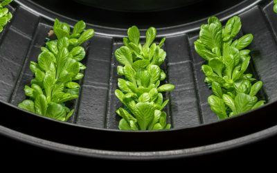 How Much Water Does Vertical Farming Use?