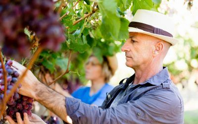 How to Buy a Vineyard: A Step by Step Guide