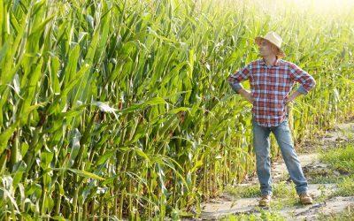 Direct Loans vs. Guaranteed Loans for Farmers