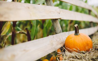 Top 7 Issues Facing Farmers in the Fall of 2020