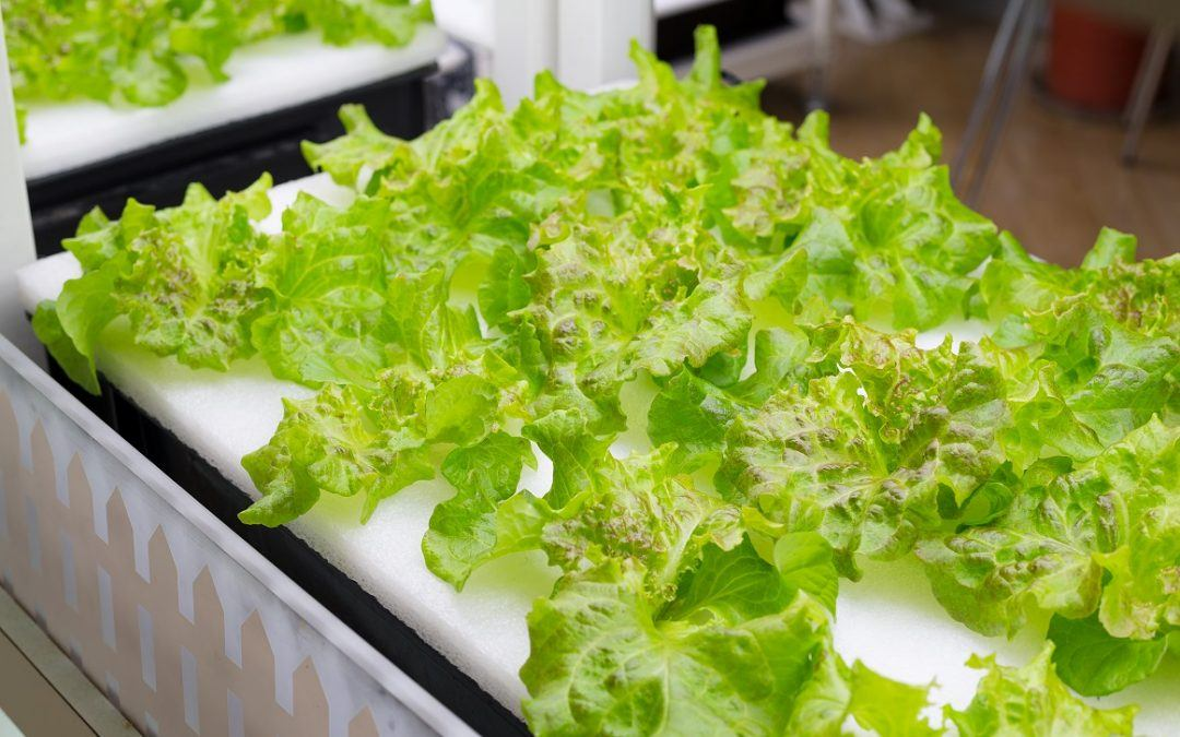 How to Apply for an Aquaponics Grant