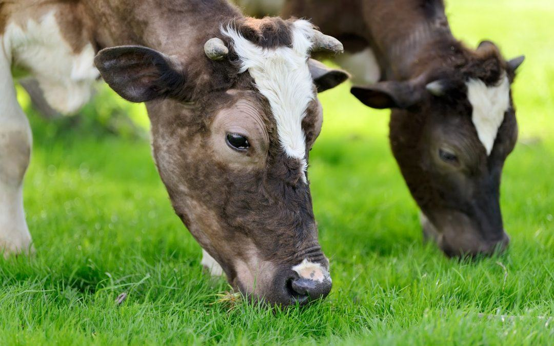 What Financing Options Are Available for Dairy Farmers?