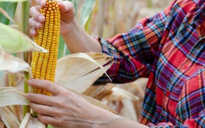 How Will the Next Generation Fuels Act Impact Corn Growers?