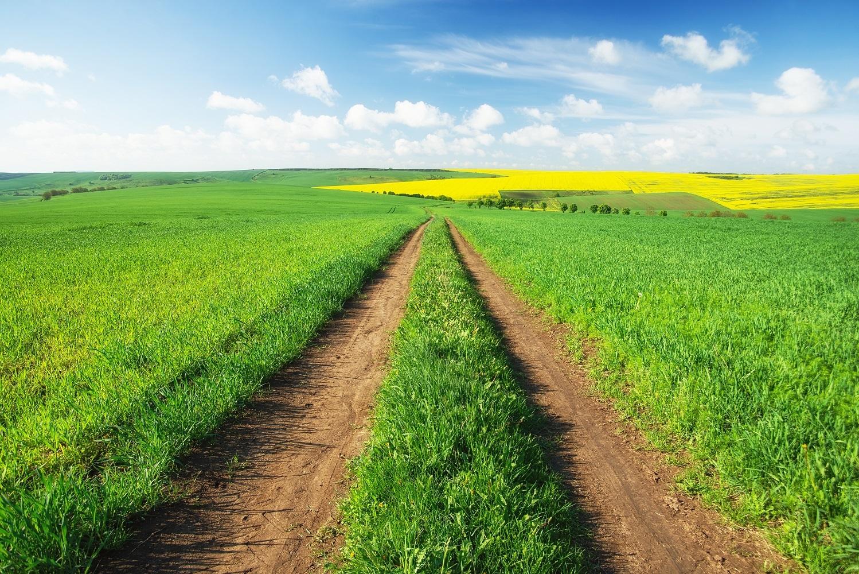 Hilltop Pasture | Plantation Properties & Land Investments
