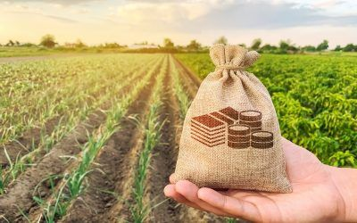 Smart Ways to Increase Your Small Farm's Annual Income